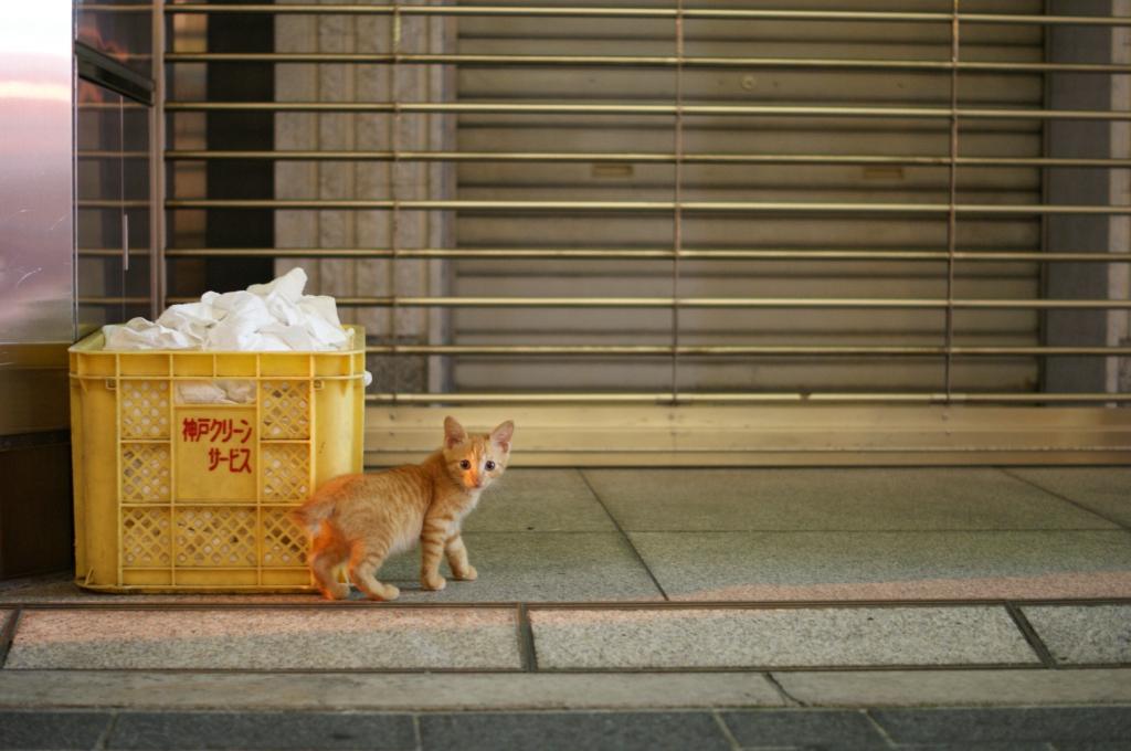 ハナクソという名の猫の話